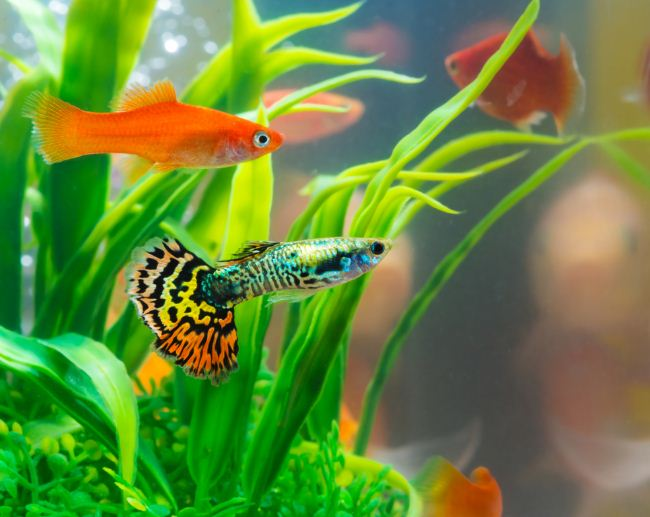 Pets at Home Fish 4 Guest Experience Survey